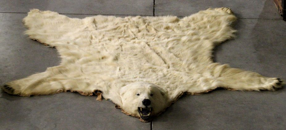 image 1 polar bear rug by jonas brothers - Bearskin Rug