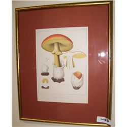 "ANTIQUE LITHOGRAPH ""MUSHROOMS"" NICELY FRAMED"