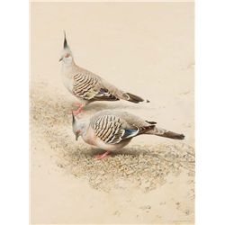 Crested Pigeons by Ching, Raymond H.