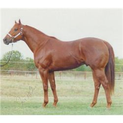 Streak And Dash -  Sorrel AQHA Stallion
