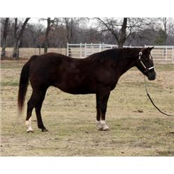 Shirleys Folly - 1989 Chestnut AQHA Mare