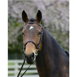 La Estrella SF - 2009 Bay Oldenburg Mare - 16hh