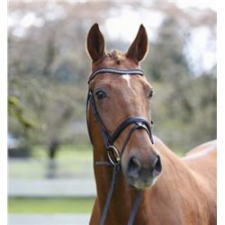 Anthony SF - 2004 Chestnut Oldenburg Gelding - 16.2+hh