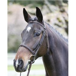 Sassha - 2004 Bay Canadian Warmblood Mare - 16.1hh