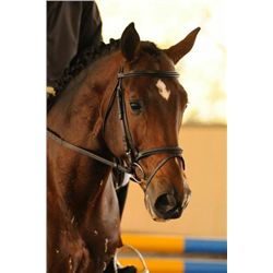 RAMZES SF - 2004 Bay Hanoverian Stallion - 16.3hh