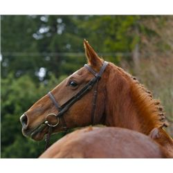 GEMSTONE SF - 1998 Chestnut Oldenburg Mare - 16.3+hh