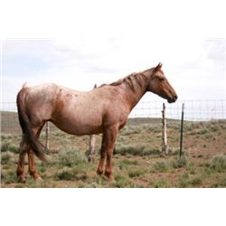 Red Berty - 1990 Red Roan AQHA Mare