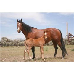Double Lena Doll - 2004 Bay  Mare