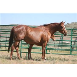 Dees Amber Light - 1999 Chestnut  Mare