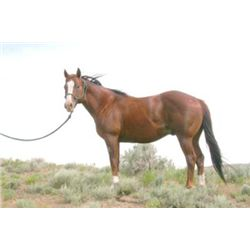 Play Yer Bets - 2007 Chestnut AQHA Stallion