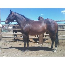 Young Bertie Bert - 2001 Brown AQHA Mare