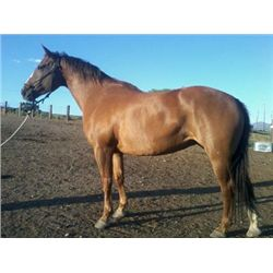 Jewels Smart Tart - 2005 Sorrel AQHA Mare