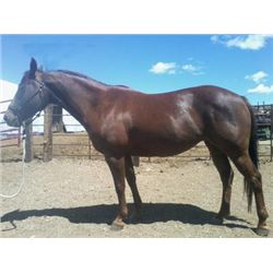 Berts Dixie Girl - 2001 Sorrel AQHA Mare
