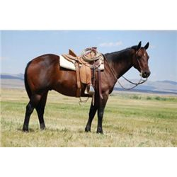 DR Freckles Two Dot - 2002 Brown AQHA Gelding