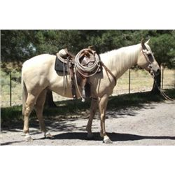OUT of SALE- 2007 Palomino AQHA Gelding