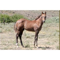 DW He Be A Top Gun - 2013 Sorrel AQHA Stud Colt