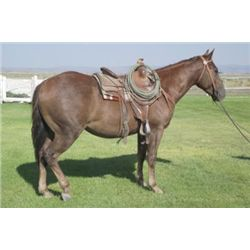 OUT of SALE-Cash N Chexs - 2010 Sorrel AQHA Gelding