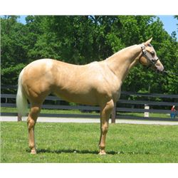 JMK Miss Superstitious - 2012 Palomino AQHA Mare