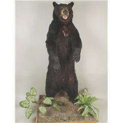 Black Bear Full Standing Mount