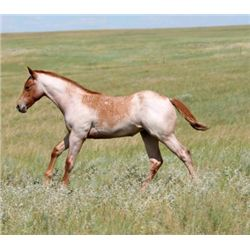 2013 Red Roan Filly - 2013 Red Roan AQHA Filly