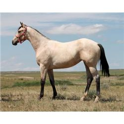 Bronsins Best Effort - 2012 Buckskin AQHA Filly