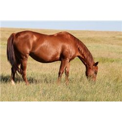 Paid By The Colonel - 2003 Sorrel AQHA Mare