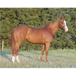 April Tornado Rey - 2008 Sorrel AQHA Mare