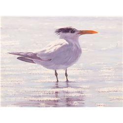 Your Tern