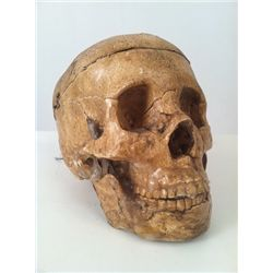 Tales from the Crypt Large Spring Rigged Human Skull Prop