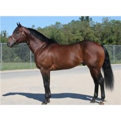 Tres Kings - 2009 Bay AQHA Stallion