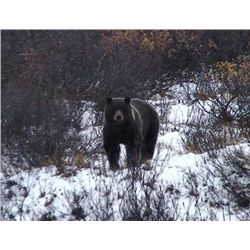 9-day British Columbia Grizzly Bear and Black Bear Hunt for One Hunter