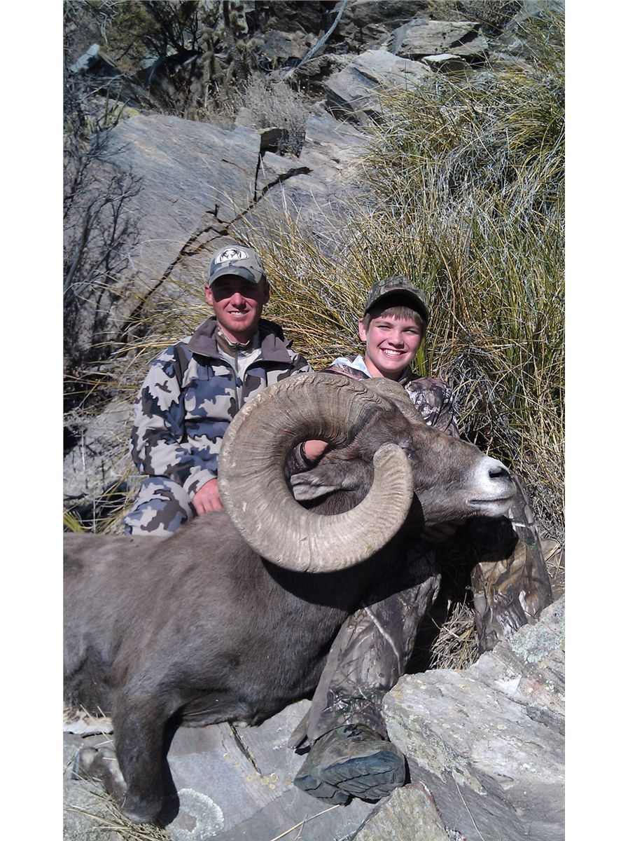 New mexico rocky mountain bighorn sheep permit new mexico for Fish and wildlife permit