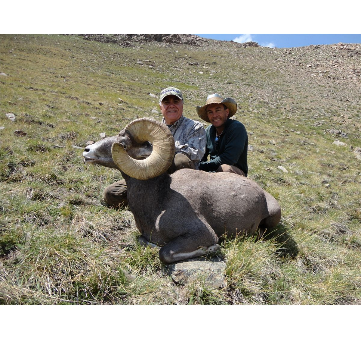 New mexico rocky mountain bighorn sheep permit new mexico for New mexico game and fish login