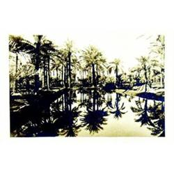 Palmeraie         Photo en noir & blanc / Black & white photo    B.E.  B + 150/300 € 30 x 4...