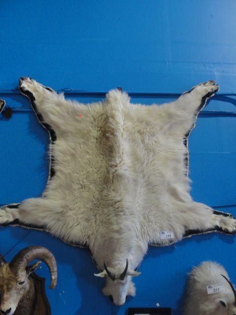 MOUNTAIN GOAT FUR HIDE WALL HANGING RUG