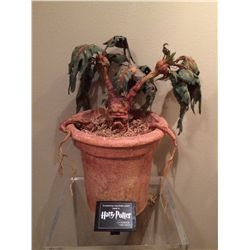HARRY POTTER SCREEN USED MANDRAKE ROOT IN POT