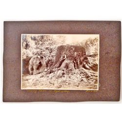 ANTIQUE MOUNTED LOGGING PHOTO OF 2 MEN STANDING BY A HUGE TREE TRUNK