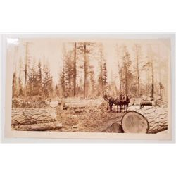 ANTIQUE LOGGING PHOTO OF HORSE DRAWN CARRIAGES & TREES