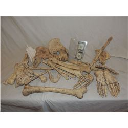 BONES HUGE LOT NO RESERVE!