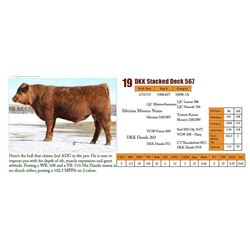Lot 19 - DKK Stacked Deck 567