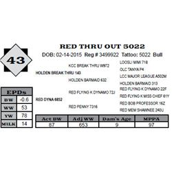 Lot 43 - RED THRU OUT 5022