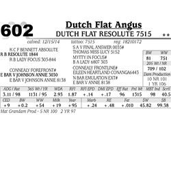 Dutch Flat Angus