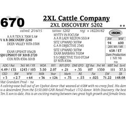 2XL Cattle Company
