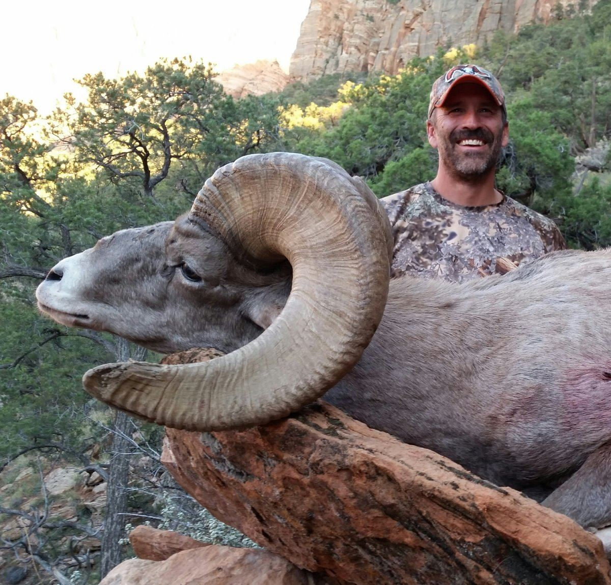 2017 utah zion late desert bighorn sheep conservation permit for Utah fishing license cost 2017