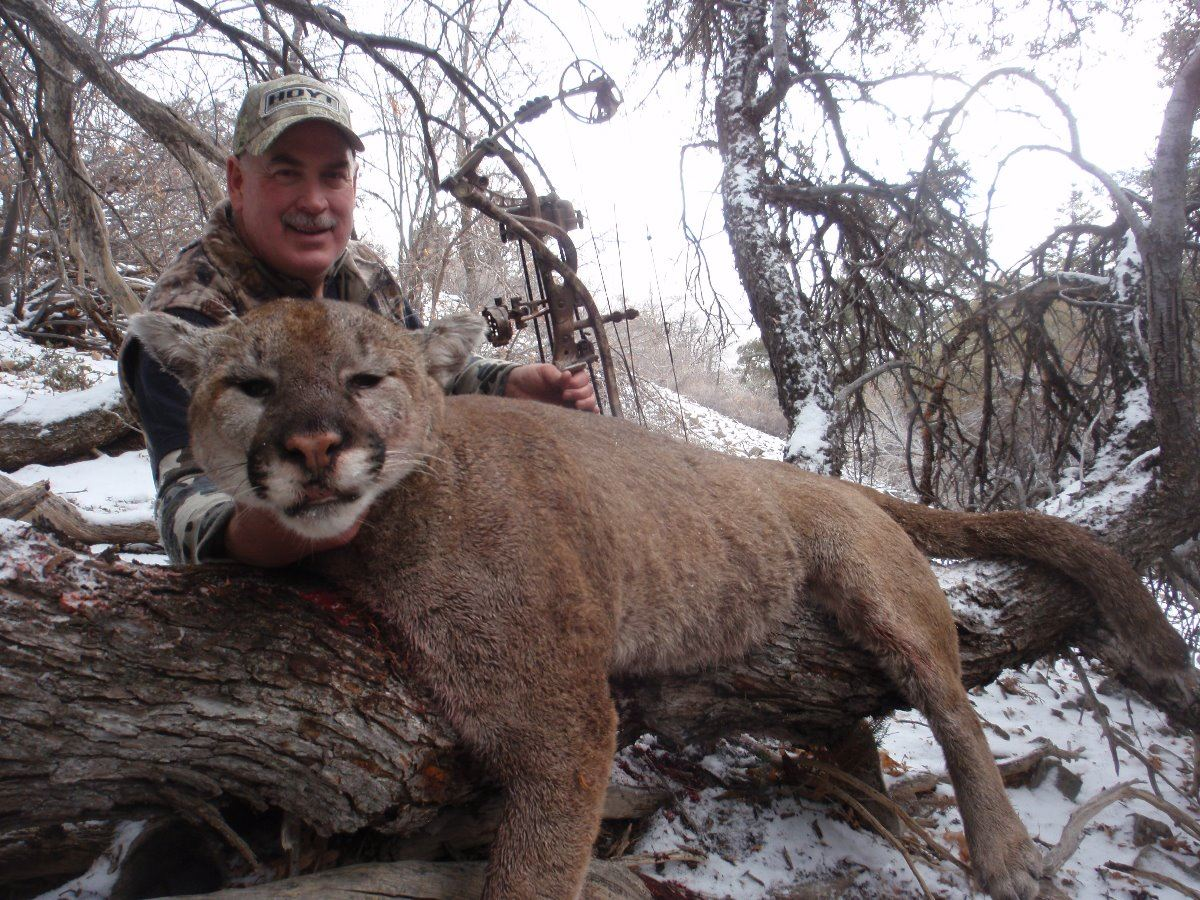 2017 utah statewide cougar conservation permit for Utah fishing license cost 2017