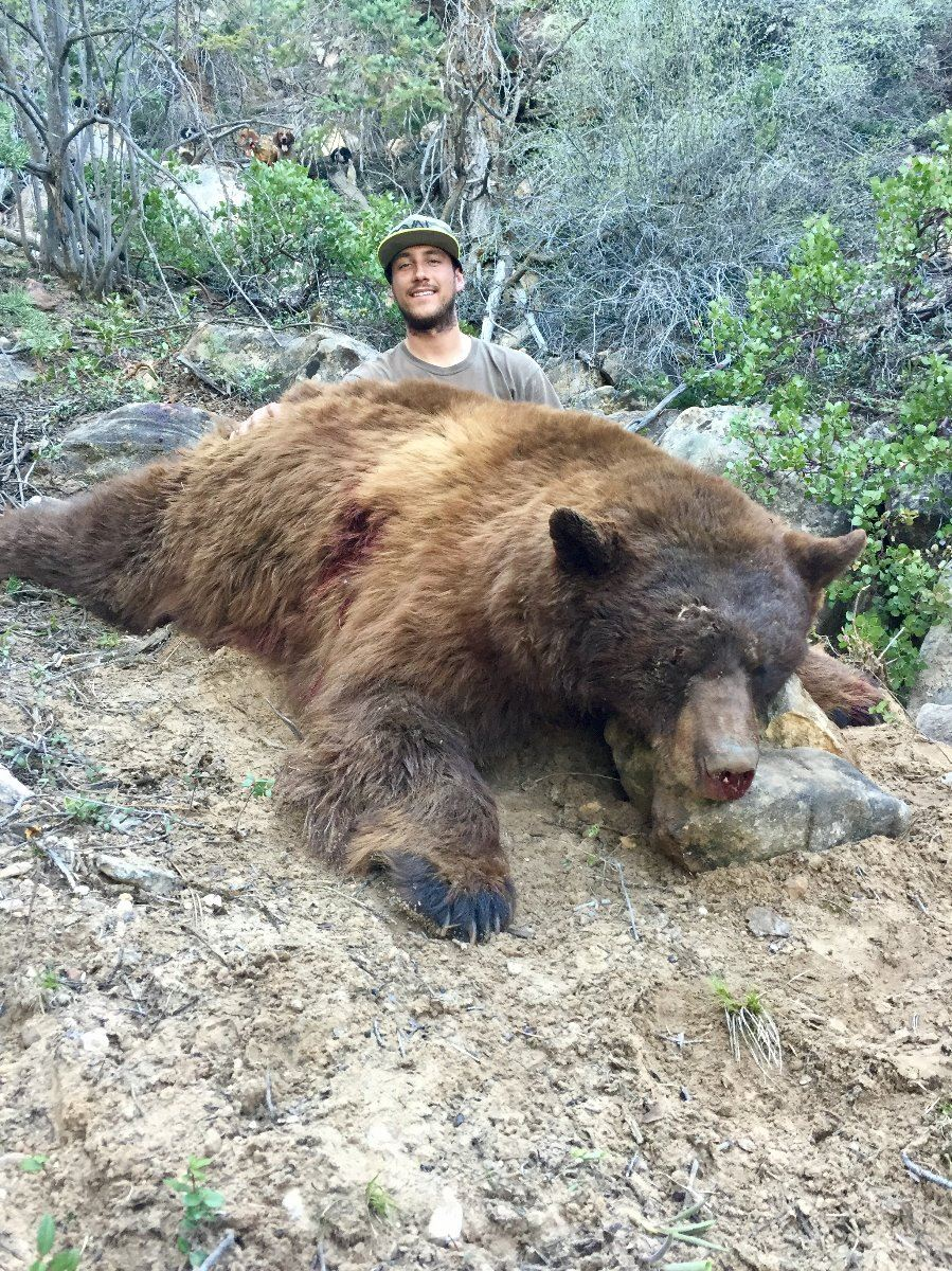 2017 utah statewide bear conservation permit for Utah fishing license cost 2017