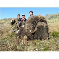 Greenland Musk Ox and Caribou Hunt for One (1) Hunter