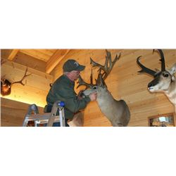 Nevada - Trophy Room Taxidermy Cleaning