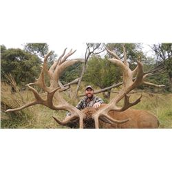 South Pacific Safaris New Zealand  - Red Stag