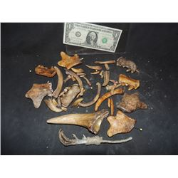 BONES CLAWS AND TEETH LOT OF RUBBER PROPS